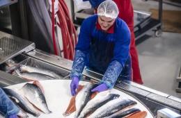 Производители лосося в Норвегии увеличили прибыль вопреки эмбарго России