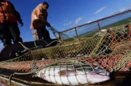 Япония проведет консультации с промысловиками после запрета в РФ на дрифтерный лов рыбы