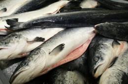 Россельхознадзор запретил поставки рыбной продукции из Польши