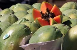 Россельхознадзор заинтересовался белорусскими лимонами и папайей