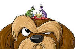 Лечение клещей у собак в ветеринарной клинике «Био-Вет»