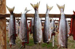 Ловля рыбы станет госмонополией