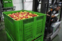Польские яблоки прикидываются белорусскими Комментарии 1