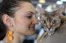 Котики и прочие домашние любимцы обеспечивают более 1% ВВП