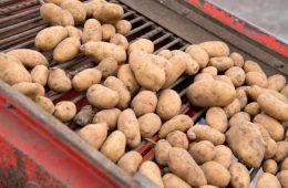 В России взлетят цены на картофель