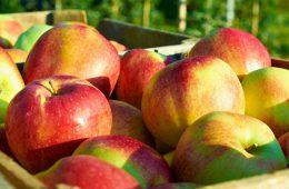 Молдавия добивается отмены пошлин на ввоз овощей и фруктов в Россию