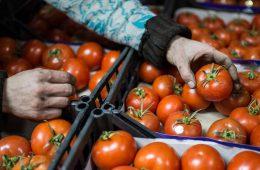 Турецкий помидор прикинется белорусским?