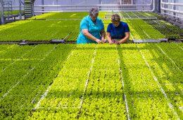 Ущерб аграриев от холодного лета оценили в 2,6 миллиарда