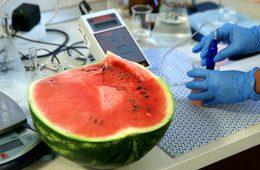 Роспотребнадзор усилит контроль за ГМО