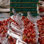 Россия начала борьбу с реэкспортом томатов