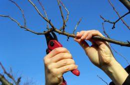 Проведение работ с деревьями