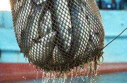 Россия и Аргентина подпишут соглашение по рыбному хозяйству