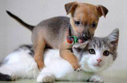 Купить щенят и котят