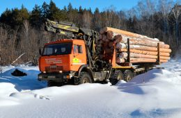 Вывоз леса из России предложили запретить