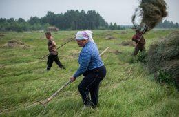 В Минсельхозе нашли способ повысить доходы сельского населения