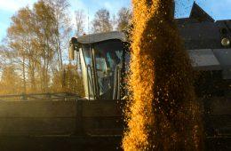 Российская пшеница упала в цене