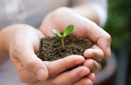Как производить и продавать удобрения для почвы