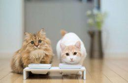 Питание домашней кошки