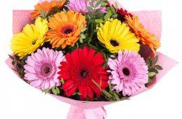 Доставка цветов предлагает герберы в ассортименте