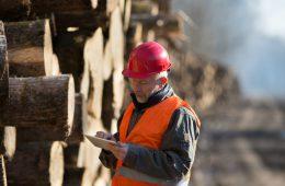 Евтухов: Приоритетные проекты лесной отрасли получат 450 млрд рублей