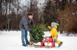 Большинство родителей получат «новогоднюю» выплату проактивно
