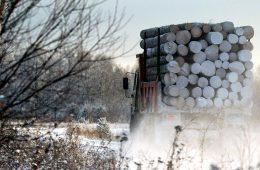 В России могут создать госкомпанию для экспорта необработанной древесины за рубеж