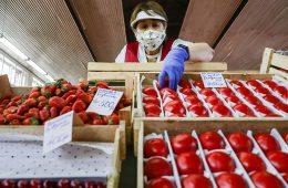 Минсельхоз увеличил квоту на ввоз томатов из Турции