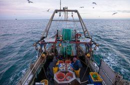Евросоюз и Британия передумали ссориться из-за рыбы
