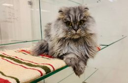 Передержка кошек в Москве