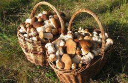 Вы заядлый грибник? Выращиваем грибы на собственной даче